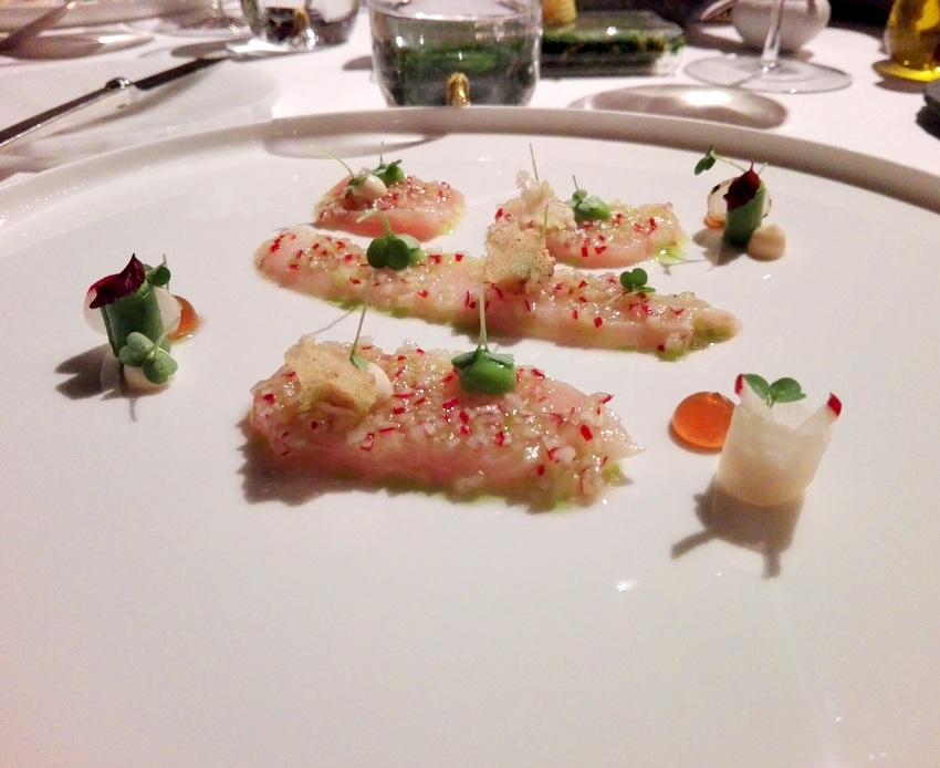 Hiramasa Kingfish, Bild (c) Claudia Busser - kekinwien.at