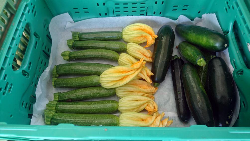 Was auf dem Markt einkaufen, Zucchini mit Blüten, Bild (c) Mischa Reska - kekinwien.at