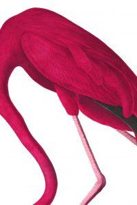 Flamingo, Sujet Viennale 2ß18 © Viennale