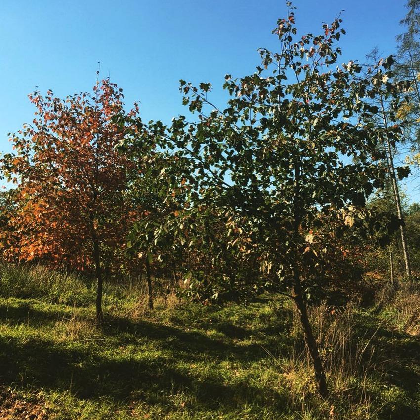 Obstbäume_Christof_Habres_kekinwien