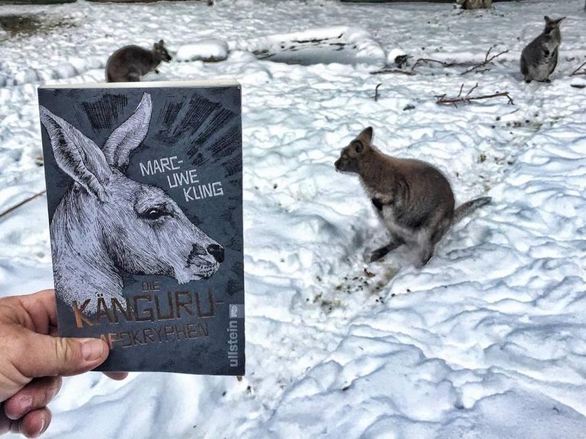 Die Känguru-Apokryphen mit echten Kängurus ins rechte Bild gerückt, Bild (c) Alexandra Wögerbauer-Flicker - kekinwien.at