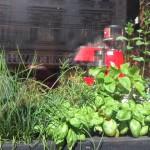 das Fenster zur Straße bei der Bartheke beherbergt viele Kräuter - sehr nett