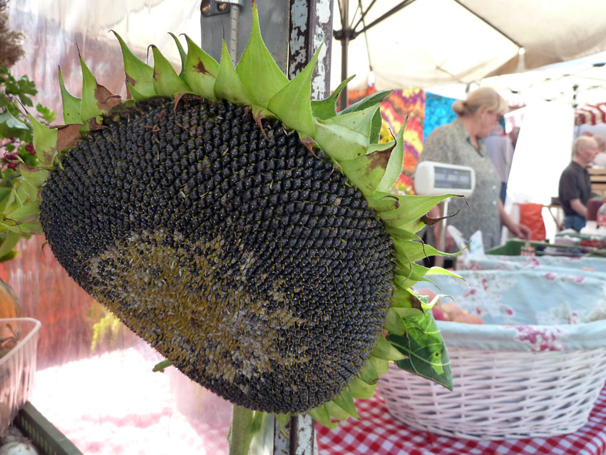 Sonnenblumenkerne ...