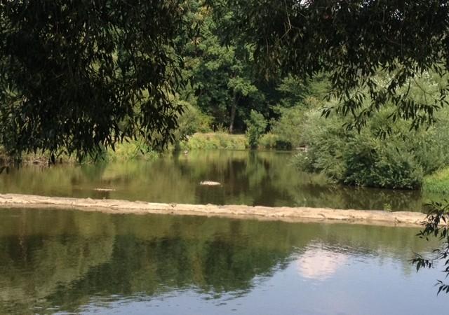 Kühles Wasser, viel Schatten, keine Menschen: Hier kann die Hitze ruhig noch ewig dauern. Fotocredit (c) Gudrun Gregori -  kekinwien.at