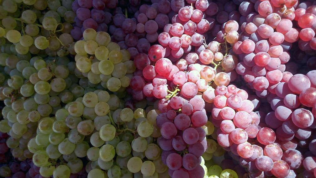 Weintrauben im Herbst auf dem Markt, Foto (c) Mischa Reska - kekinwien.at