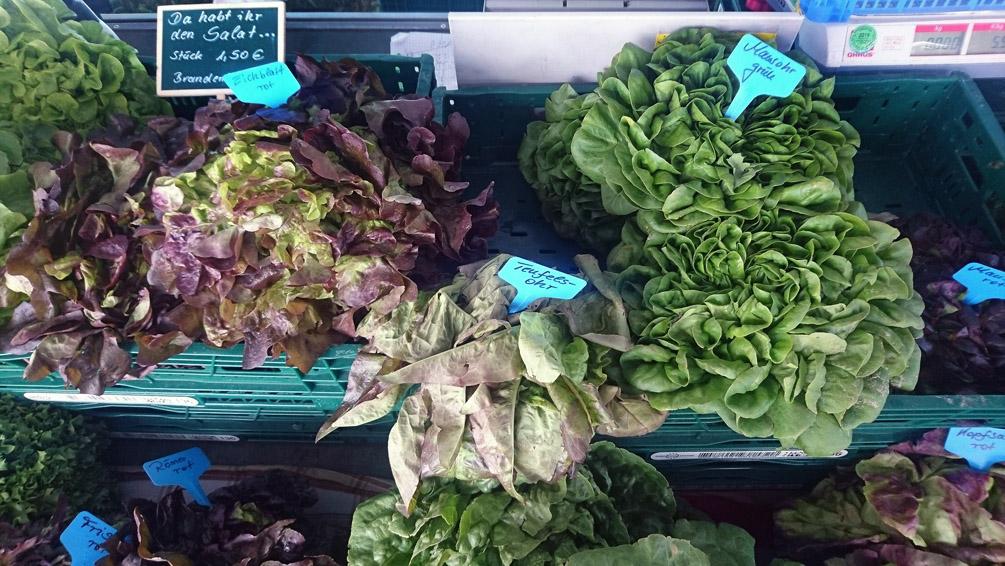 Da habt ihr den Salat: Teufels- oder Maus - Ohr? Auf dem Markt in Berlin - kekinwien.at