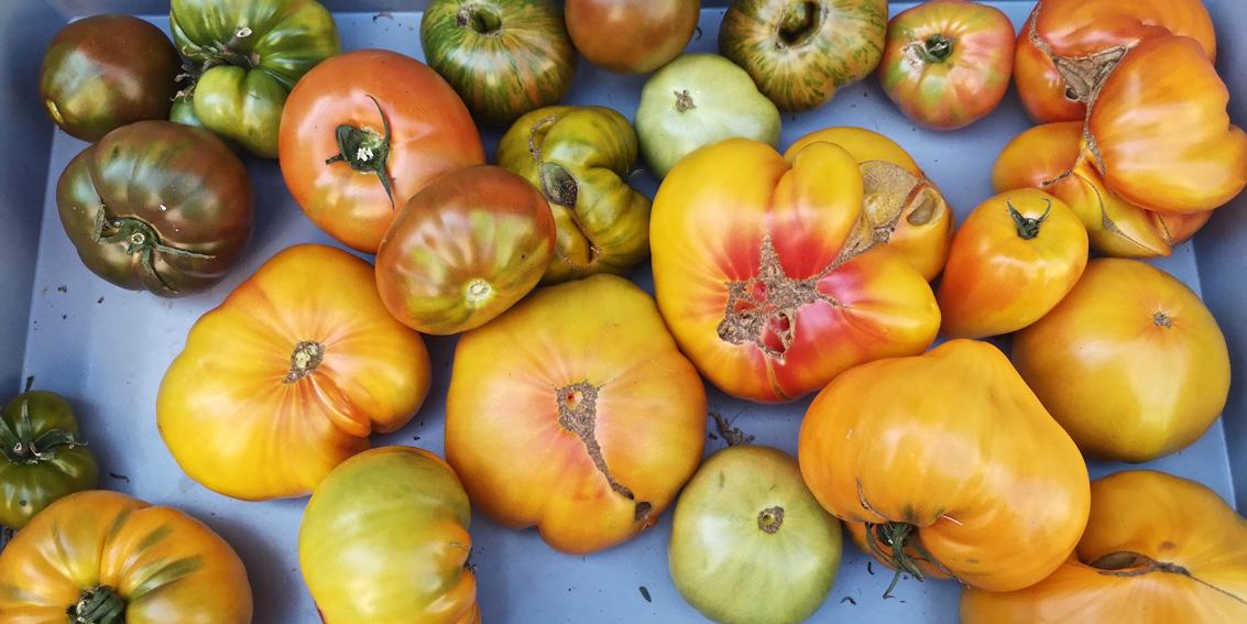 Was auf dem Markt einkaufen, Paradeiservielfalt, Bild (c) Mischa Reska - kekinwien.at