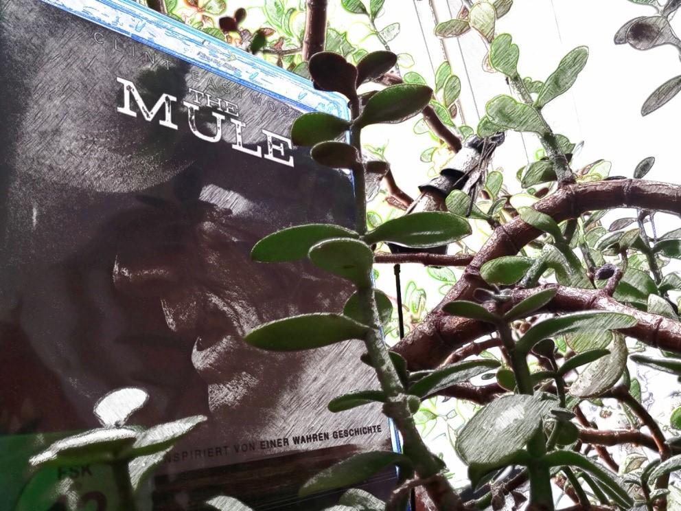 The Mule, DVD -Tipp - kekinwien.at