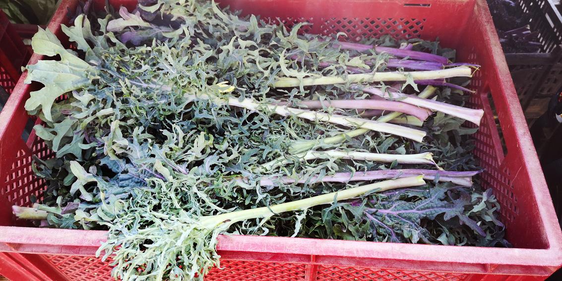 auf dem Markt im Herbst, besser bio, Bild (c) Mischa Reska - kekinwien.at