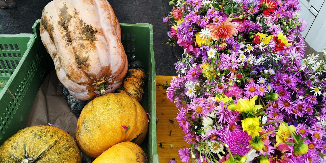 Kürbisse und Herbstblumen, auf dem Markt, alles bio, Bild (c) Mischa Reska - kekinwien.at