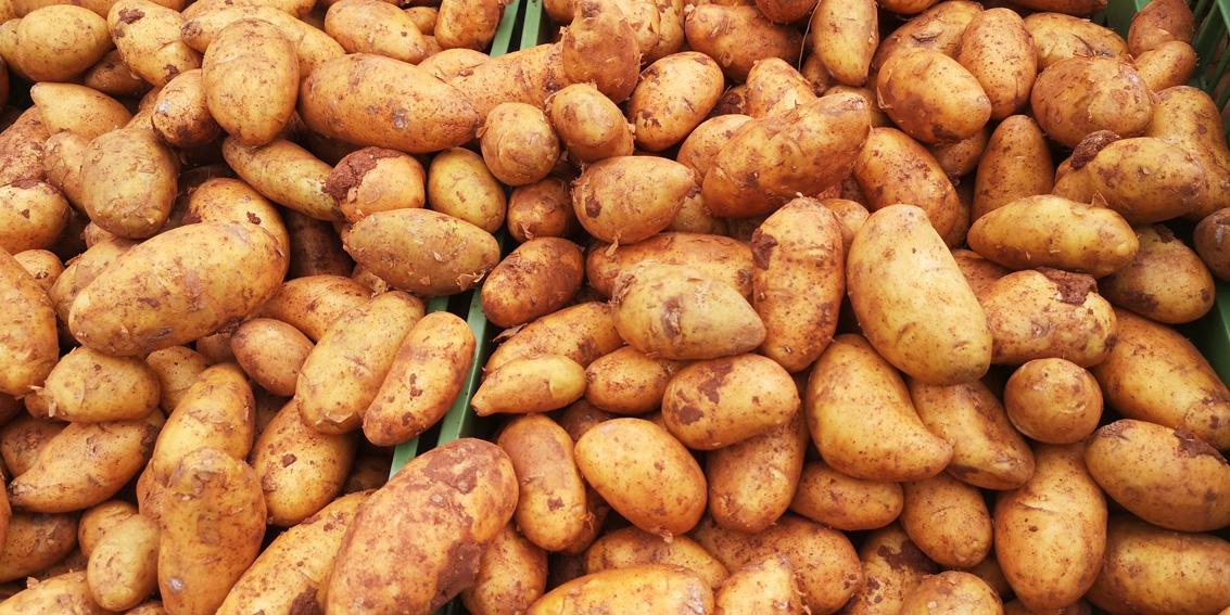 Kartoffel, Erdäpfel ©mischa_reska_kekinwien.at