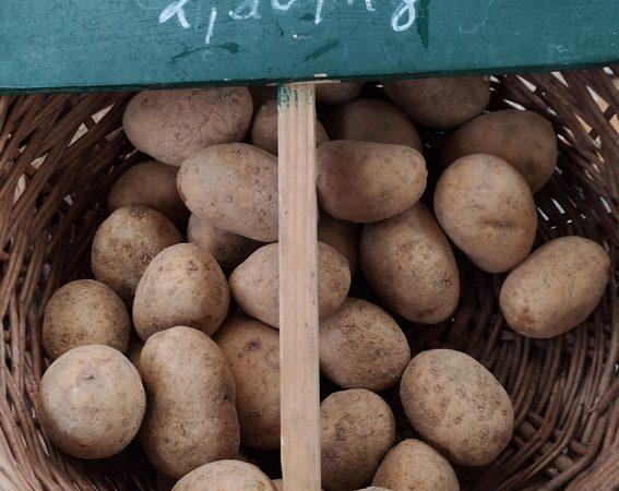 Agria, Erdäpfelsorte, auf dem Markt, Bild (c) Mischa Reska - kekinwien.at