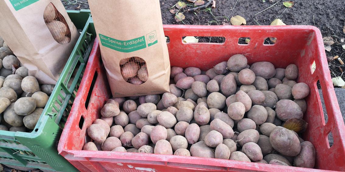 Bio-Speise-Erdäpfel auf dem Markt, Bild (c) Miascha Reska - kekinwien.at