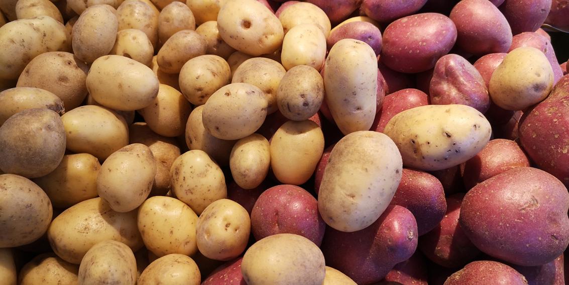 Sortenvielfalt, von Gelb bis Violett: die Kartoffel, Bild (c) Mischa Reska - kekinwien.at