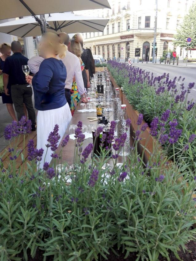 Lavendel im Schanigarten des Ma Belle beim Eröffnungsfest, Bild (c) Claudia Busser - kekinwien.at